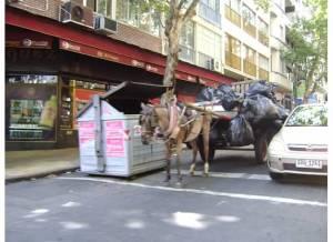 donkey trashman